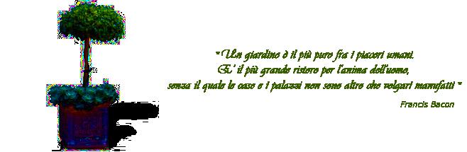 francis_albero