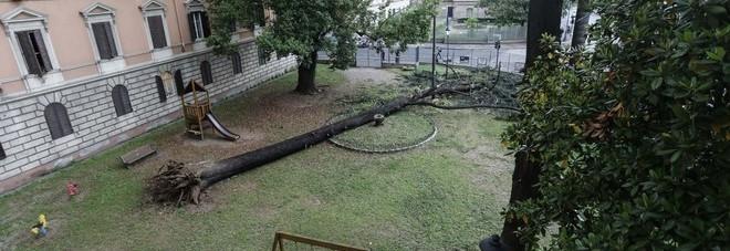 vta alberi condominio