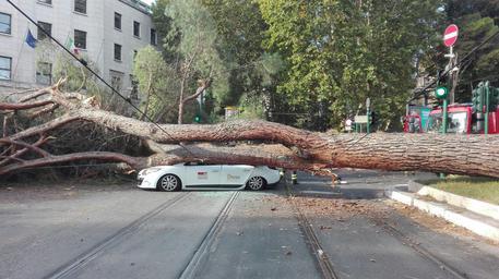 foto albero caduto su un taxi a Roma