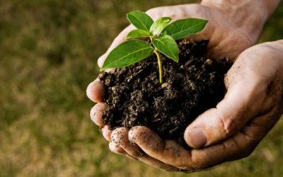 Le principali malattie delle piante